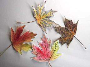 sketched and real autumn leaves together