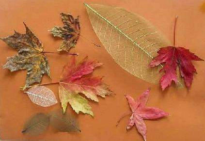 A Leaf Collage For Kids Art