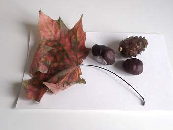 dried leaf and conkers
